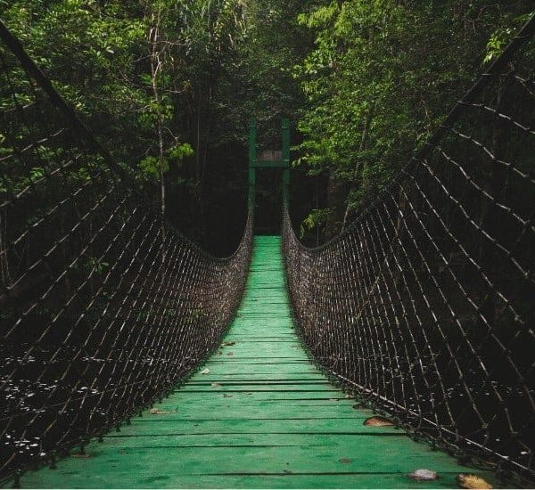 an image of a fenced bridge in a jungle featured image for Are You a Weary Wanderer without a Shepherd to Guide You?