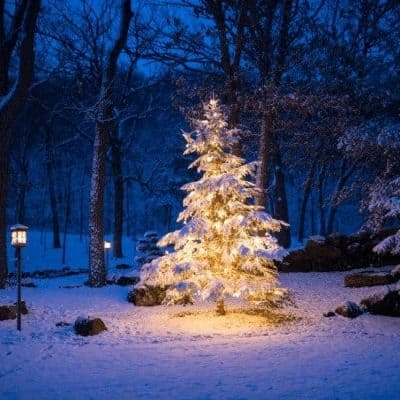 an image of a christmas tree lit up in the woods. featured image for Do You Know the Real Reason For The Season? Birth of Jesus